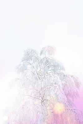 Winterzauber - p454m2071794 von Lubitz + Dorner