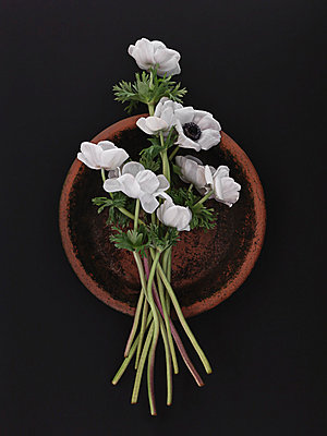 Anemones - p1052m925344 by Wolfgang Ludwig