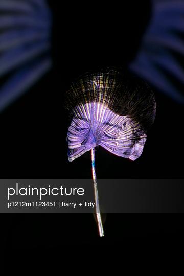 Palmblattprojektion auf Frau mit geschlossenen Augen - p1212m1123451 von harry + lidy