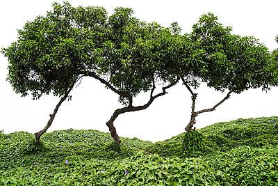 Peru, Bäume - p1643m2229370 von janice mersiovsky