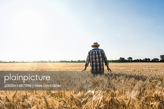 Back view of senior farmer standing in wheat field - p300m1487399 by Uwe Umstätter