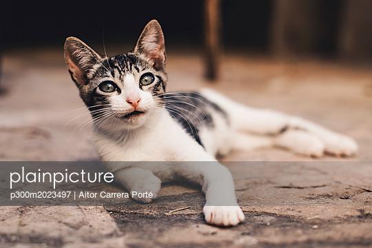 plainpicture - plainpicture p300m2023497 - Portrait of relaxed kitten - DEEPOL by plainpicture/Aitor Carrera Porté