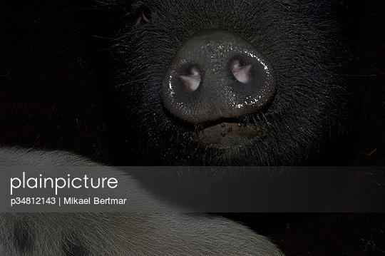 p34812143 von Mikael Bertmar