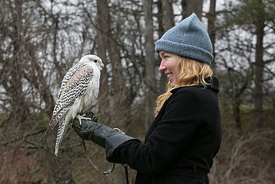 Woman holding Saker falcon - p919m1111547 by Beowulf Sheehan