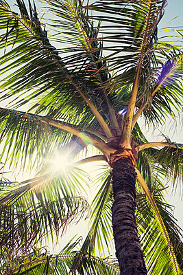 Palm tree, close-up - p495m1034280 by Jeanene Scott