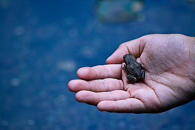 Girl holding a frog in her hand - p7540086 by Valea Diller-El Khazrajy