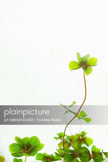 Lucky clover - p1149m2141433 by Yvonne Röder