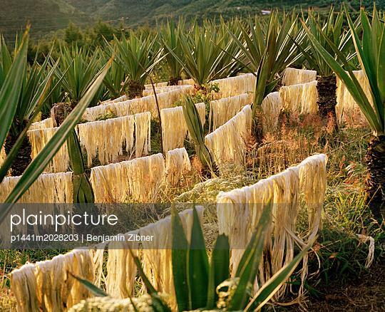 Pflanzen - p1441m2028203 von Benjamin Zibner
