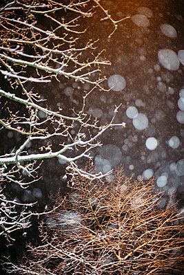 Snow at night - p1621m2260175 by Anke Doerschlen