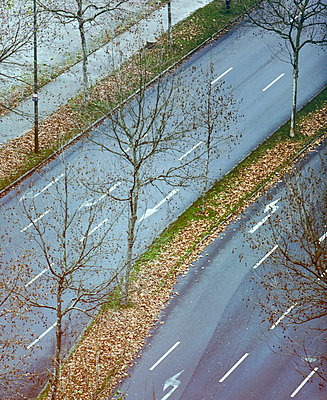 Germany, Düsseldorf, Street, grass strip with leaves, elevated view - p300m878821 by Mareen Fischinger