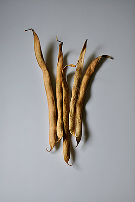 five dried fire beans - p876m2187333 by ganguin
