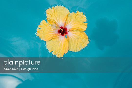 p4429642f von Design Pics