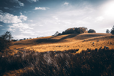 Hilly landscape with sheep out at feed, Northern Ireland - p1681m2283591 by Juan Alfonso Solis