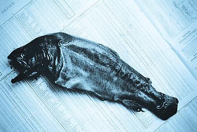 Toter Fisch - p4170099 von Pat Meise