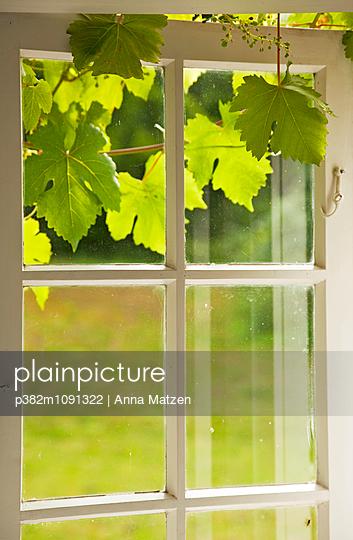 Fenster mit Weinlaub - p382m1091322 von Anna Matzen