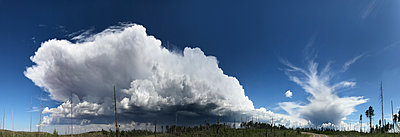 Panoramic view of thunderstorm clouds over a burned forest - p1048m2025459 by Mark Wagner