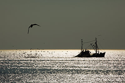 Fischerboot Im Meer - p415m1586113 von Tanja Luther