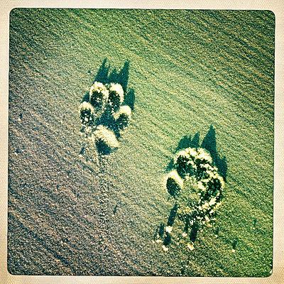 Hundespur - p586m753631 von Kniel Synnatzschke