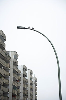 Pigeons on street lamp - p763m971796 by co-o-peration