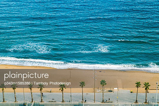 Beach with palm trees, Barcelona, Catalonia, Spain - p343m1585386 by Tamboly Photodesign
