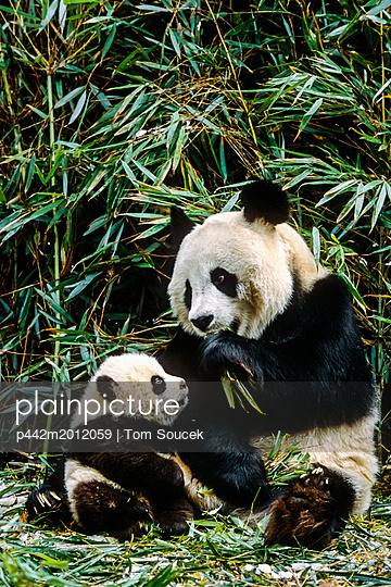p442m2012059 von Tom Soucek