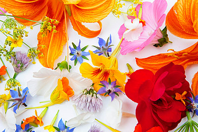 Wildblumen - p6370116 von Florian Stern