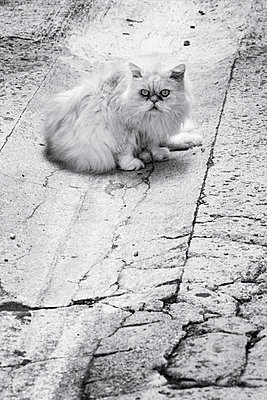 Street Cat - p977m919657 by Sandrine Pic