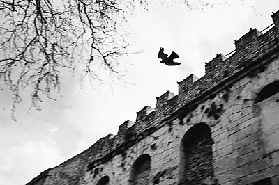 Croatia, Split, Bird above old ruins - p1616m2191589 by Just - Schmidt