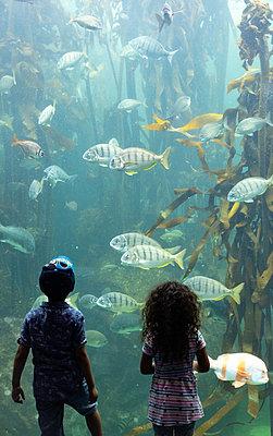 Two Oceans Aquarium, children marvel at sea animals - p1640m2246234 by Holly & John