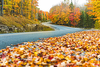Canada, Ontario, main road through colorful trees in the Algonquin park area - p300m2013268 by William Perugini
