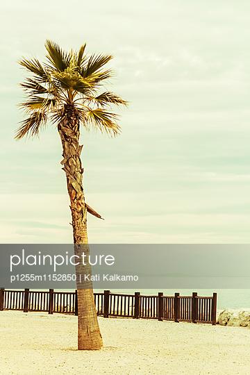 Palme am Strand - p1255m1152850 von Kati Kalkamo