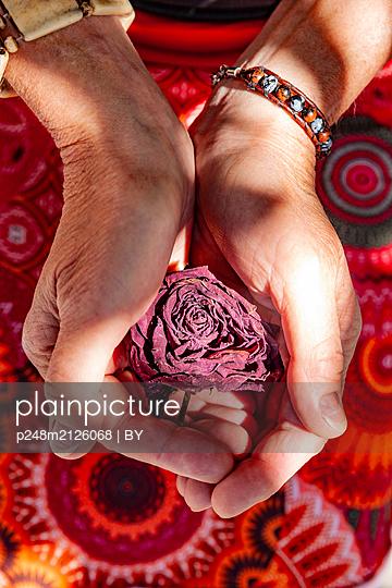 Welke Rosenblüte in der Hand - p248m2126068 von BY