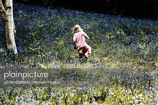 bluebells - p378m2085674 by Richard Poulton