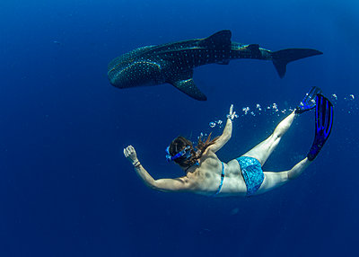 Snorkeller swimming with a juvenile whale shark (Rhincodon typus) in Honda Bay, Palawan, The Philippines, Southeast Asia - p871m2122883 by Duncan Murrell