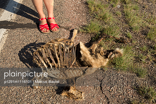 Roadkill - p1291m1116101 by Marcus Bastel