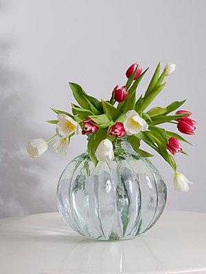 Tulips - p2686938 by Clara Ritz