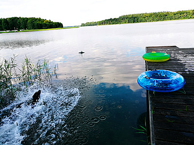 A dog splashing in Lake Schalsee - p551m1585023 by Kai Peters