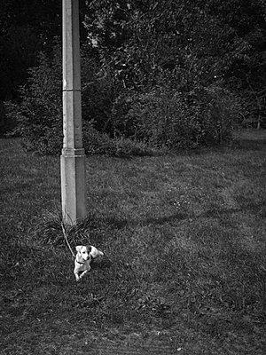 kleiner wartender hund - p627m671186 by Hendrik Rauch