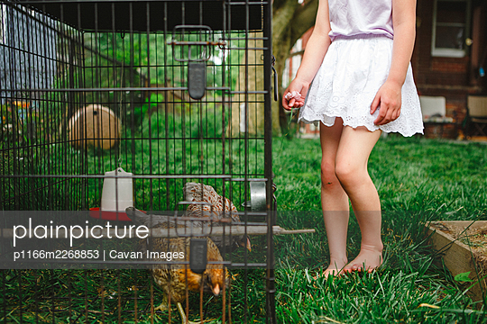 Bottom-half of little girl standing barefoot by cage with chickens - p1166m2268853 by Cavan Images
