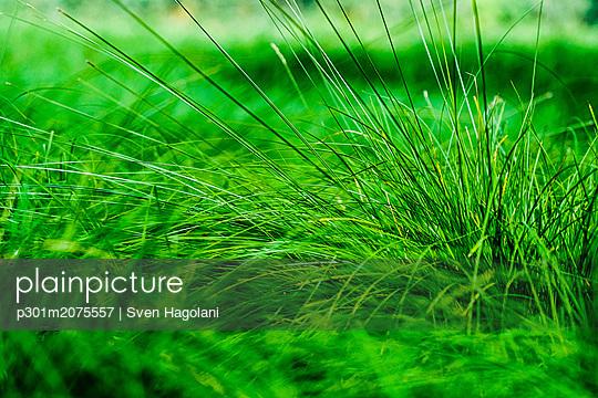 p301m2075557 von Sven Hagolani