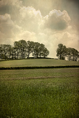 English Countryside - p1072m993478 by miguel sobreira