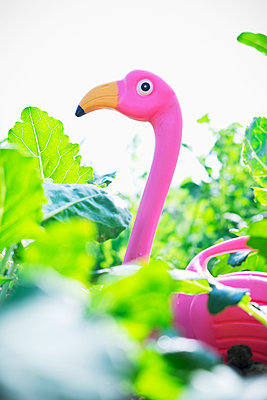 Flamingo in vegetable garden - p1149m1582818 by Yvonne Röder