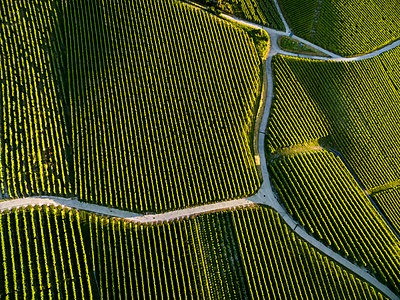 Aerial view of vineyards and road - p343m1475928 by Raffi Maghdessian