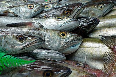 Frische Fische - p1189m1059708 von Adnan Arnaout