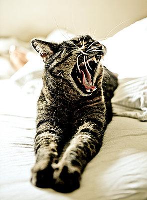 Cat - p1221m1028483 by Frank Lothar Lange