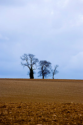 Agriculture - p2480825 by BY
