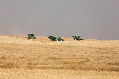 Mähdrescher auf einem Weizenfeld - p552m1462159 von Leander Hopf