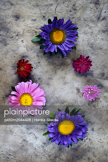 Bunte Blüten     - p450m2044428 von Hanka Steidle