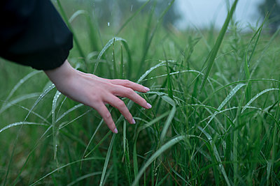 Woman touching blades of grass - p1646m2290898 by Slava Chistyakov