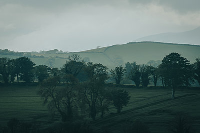 Fields and trees at dawn, County Down - p1681m2283604 by Juan Alfonso Solis
